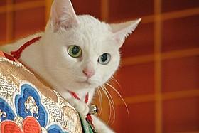 「猫侍」玉之丞を演じたのネコの未公開写真「猫侍」