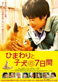 ひまわりと子犬の7日間のポスター
